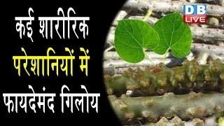 गिलोय के फायदे|Health Benefits of Giloy in Hindi|Health benefits of Giloy | #HealthLive
