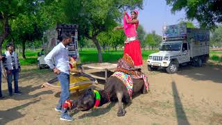 New Superhit DJ Rajasthani Gurjar Rasiya   Gad Gatti Me   Balli Gurjar Rasiya