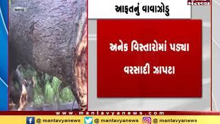 Banaskantha: Trees fall due to Strong winds, cause damage - Mantavya News