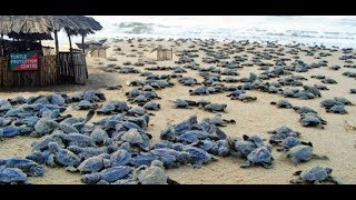 High Court Stays Demolition Of Shacks in intertidal zone, on turtle nesting sites