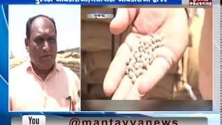 Junagadh: Authorities investigate the Tuver stock at Visavadar Market Yard