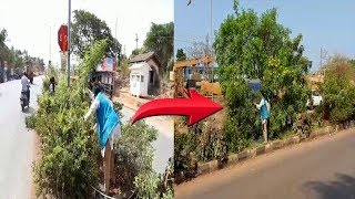 Fed Up With Inaction By Authorities, Tara Kerkar Trims Overgrown Trees