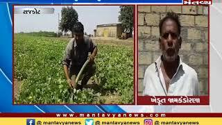 Rajkot: જામ-કંડોરણાનાં ખેડૂતની મહેનત લાવી રંગ, ઓર્ગેનીક ખેતીમાં મેળવી સફળતા