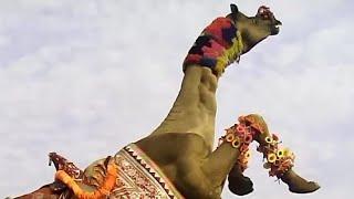 ऊँट व चकरी व देशी डांस हर शादी म होता ह इनका डांस