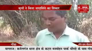 गोंडा //-आवारा कुत्तों ने एक बारहसिंघा हमला बोल दिया जब वह पानी की तलाश में भटक कर गांव की तरफ आ गया