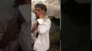 #Samarsinghsadsong दिवाना मार जाई  Tiktok ka naya star #Sandeep raj