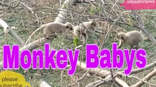 Monkey Babys are enjoying.