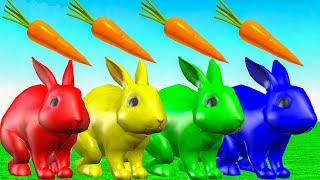 Learn Animals Names And Sound with Rabbit Eating Carrots - Animales de la granja Videos para niños.