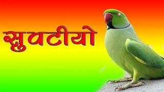 Latest Rajasthani Dj Mix Song | सुवटीयो - Suvatiyo | Yuvraj Mewadi | New Superhit Marwadi Dj Song