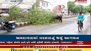આણંદમાં 'વાયુ' વાવાઝોડાની અસર, ભારે વરસાદના કારણે વૃક્ષો ધરાશાહી - Mantavya News