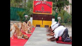 Rahul Gandhi's 'New India' jibe on World Yoga Day