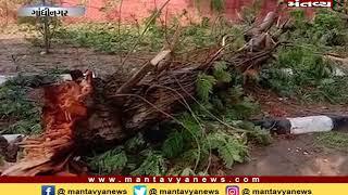 Gandhinagar: મોડી રાત્રે ભારે પવન સાથે વરસાદ, વીઆઈપીના રહેઠાણ વિસ્તારોમાં વૃક્ષો ધરાશાયી
