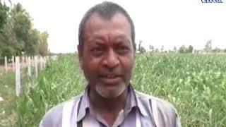 Kutch |Damage to Mango Crops | ABTAK MEDIA
