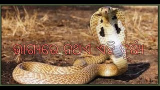 Cobras - Live Science Cyclone Topics Android One Plus