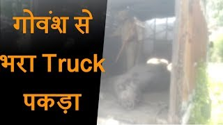Kalakote में लोगों ने गोवंश से भरा Truck पकड़ा, Truck driver को पीट-पीटकर किया Police के हवाले