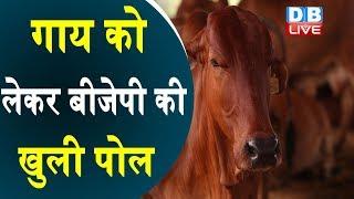 गाय को लेकर BJP की खुली पोल | BJP को नहीं है गायों की फिक्र |#DBLIVE