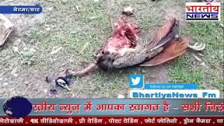 राष्ट्रीय पक्षी मोर की संदेहास्पद परिस्थिति में हुई मौत l #bn #bhartiyanews