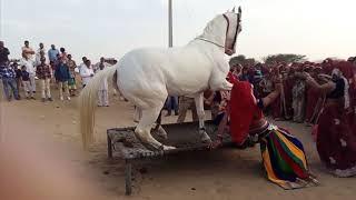 Dj wala Gano laga sadi ko | डी जे वाला गानो लगा शादी को | New Rajasthani Camel Dance