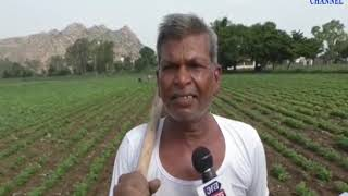 Sabarkantha |Rain Stretching Probability of crop failure| ABTAK MEDIA