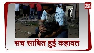कुत्ते ने मालिक की जान बचा सच साबित की कहावत