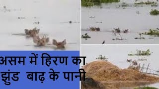Assam Floods: Viral Video of Deer Wading Through Deep Neck Waters