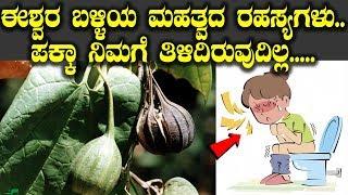 ಈಶ್ವರ ಬಳ್ಳಿಯ ಮಹತ್ವದ ರಹಸ್ಯಗಳು ಪಕ್ಕಾ ನಿಮಗೆ ಇಳಿದಿರುವುದಿಲ್ಲ || Top Kannada TV