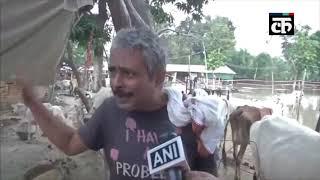बिहार: मधुबनी में 500 से ज्यादा गायों वाली गौशाला में घुसा बाढ़ का पानी