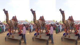 New Rajasthani Dj Song || मेरी एड़ी की धमक डिजो रिजो रसिया || Latest Rajasthani Rasiya Dj Song