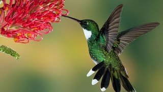 The Awesome Flying Strength of a Hummingbird | Have a Look...!!