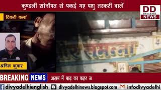 पशु तस्करों के खुले होंसले, नहीं डरते पुलिस से || DIVYA DELHI NEWS