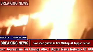 BREAKING NEWS, Cow shed gutted in fire Mishap At Tappar Pattan