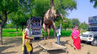 New Latest Rajasthani Video || गोरिन ते गोरिन ते || Rajasthani Rasiya Video Song 2019