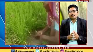 Krushi Yatra: ડાંગરની આધુનિક ખેતી પદ્ધતિ (27/07/2019) - Mantavya News