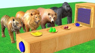Animales salvajes comiendo frutas y transforman en animales coloridos - Video for kids.