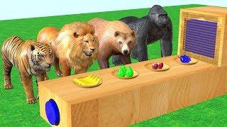 Animales salvajes comiendo frutas y transforman en animales coloridos - Video for kids.