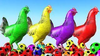 Los animales de granja y sus crías transforman - Chicken Playing With Colorful Ball for kids.