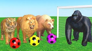 Los animales de granja y sus crías transforman - Wild Animals Playing With Football.