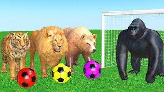 Los animales de granja y sus crías transforman - Wild Animals Playing With Football.