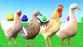 Farm Animals Counting Eating Fruits And Color Changing - Videos para niños.