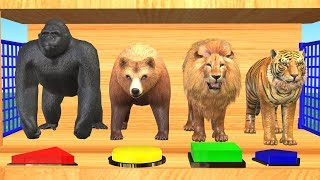 Wild Animals Playing With Football And Changing Colors - Videos para niños
