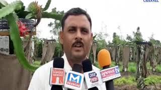 Dhoraji: Zero Budget Dragonfoot is cultivated in Dhoraji | ABTAK MEDIA
