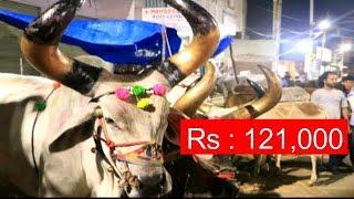 Bakrid Ke Liya Sabse Bada Aur Accha Jaanwar In Hyderabad Old City Vattapally .