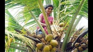 ನೀವು ಎಳನೀರು ಕುಡಿಯುತ್ತಿದ್ದಿರಾ.... ಕುಡಿಯುವ ಮುಂಚೆ ತಪ್ಪದೆ ಈ ವಿಡಿಯೋ ನೋಡಿ || Coconut Water Health Uses