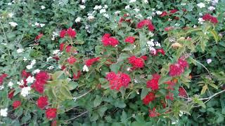 Most beautiful natural flower garden | Indian garden plants | online entertainment