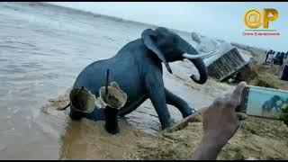 Dolls on the beach | బీచ్ లో కొట్టుకు పోతున్నబొమ్మలు | Kalingapatnam Beach | Floods IN India