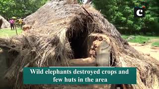 Elephant herd enters village in Odisha's Mayurbhanj, destroys huts and crops