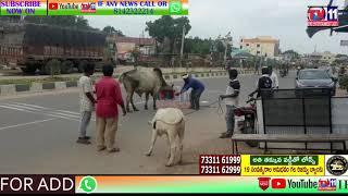 MUNICIPALITY STAFF CAUGHT COWS AND BUFFALOES ROAMING ON ROADS | NIRMAL | TELANGANA