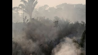 Wildfires rage in Brazil's Amazon Rain forests, 83% rise from last year