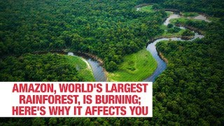 Amazon worlds largest rainforest is burning heres why it affects you