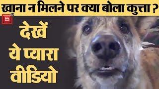 बोलने वाले Dog का ये Video जमकर हो रहा Viral